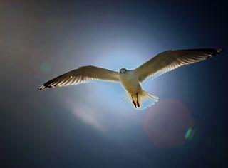 Gull_edited-1