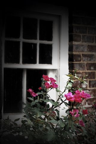 Windowflowers