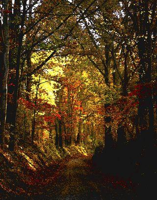 Culp9-1 wooded path
