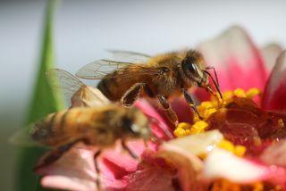 Bee morning